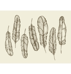 Hand drawn sketch feathers plumage fluff vector
