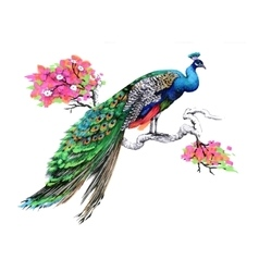 Watercolor drawing peacock on blooming tree branch vector