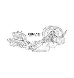 Fresh eco vegetables hand drawn realistic sketch vector