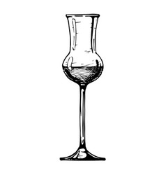 grappa glass vector image vector image