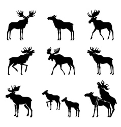 Set of moose silhouettes vector