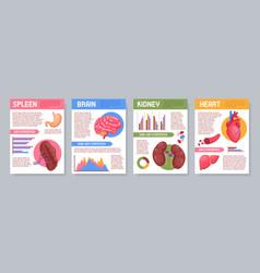 human internal organs posters set vector image