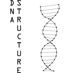 DNA Symbol vector image