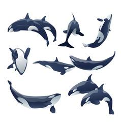 Killer whale show vector
