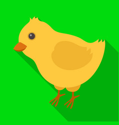 Yellow fluffy chick easter single icon in flat vector