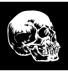 Skull 001 vector
