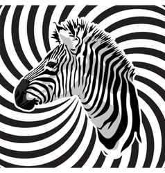 Zebra portrait on abstract strips background vector image vector image