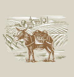 wineyard and a donkey vector image