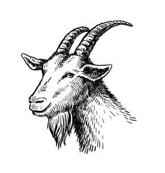 head of goat vector image