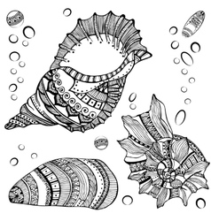 Set of decorative seashells isolated on white fond vector
