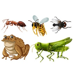 Set of different kinds of insects vector image vector image