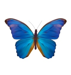 Blue butterfly isolated on white realistic vector