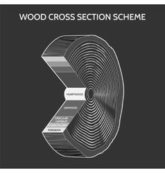 Wood cross section scheme vector