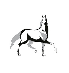 Horse drowing vector image vector image