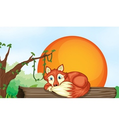 fox resting on wood vector image vector image