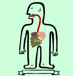 digestive system vector image