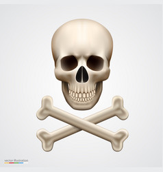 human skull isolated on white vector image