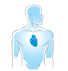 internal organs heart vector image vector image