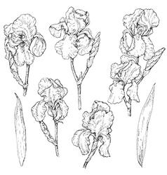 Iris doodle set vector