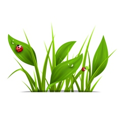 Green grass plantain and ladybugs isolated on vector