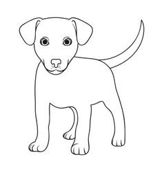 Puppy labradoranimals single icon in outline vector