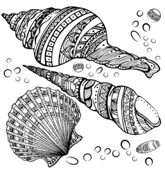 Set of decorative seashells isolated on white fond vector