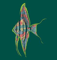Graphic aquarium scalar or angelfish concept vector