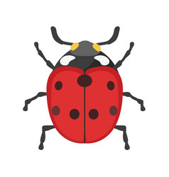 Insect ladybug icon flat isolated vector