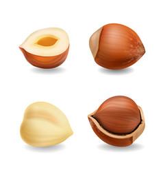 hazelnuts set realistic vector image