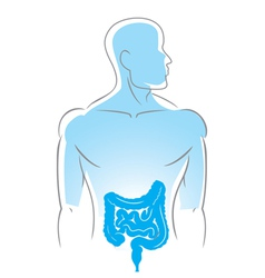 internal organs intestines vector image