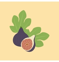 Fig fruit icon vector
