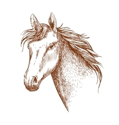 Arabian stallion horse head sketch vector