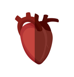 Healthy heart human organ image vector