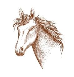 Arabian stallion horse head sketch vector