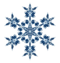 Beautiful Blue Snowflake Isolated On White vector image vector image