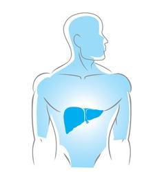 Internal organs liver vector