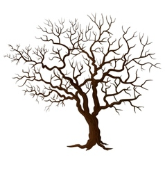 Tree without leaves isolated on white vector image vector image