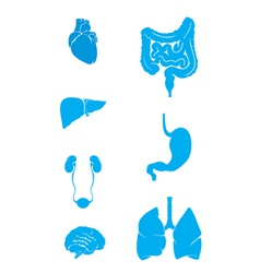 internal organs set vector image