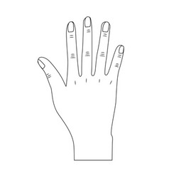 Line nice hand with all fingers and nails vector