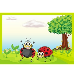 Smiling ladybugs vector image