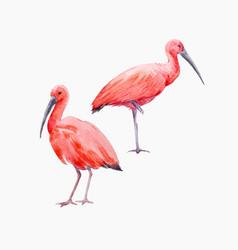 Watercolor ibis bird set vector