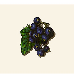 Black currant sketch vector