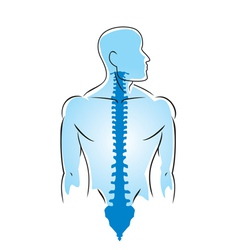 anatomy of human spine vector image vector image
