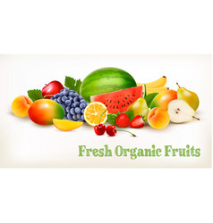 big collection of different fresh fruit vector image vector image