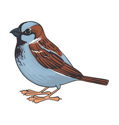 drawing sparrow vector image