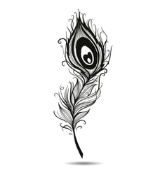 Peacock feather isolated black in background vector