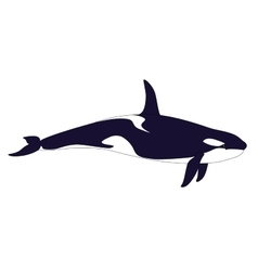 Realistic killer whale on a white background vector