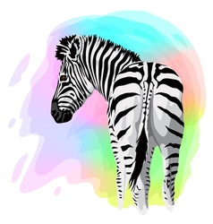 Zebra on abstract bright background vector