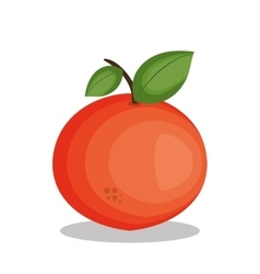 Icon orange fruit design vector
