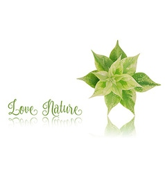 Green leaf with reflection on white background vector image vector image